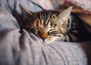 blog over katten