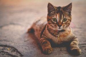katten mand