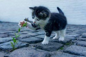 kattenrkuid