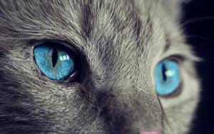 kattenbrokken