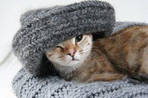 spullen voor katten