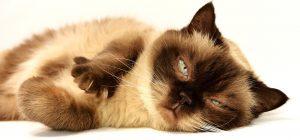 kattennagels knippen