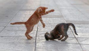 katten wassen